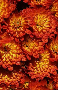 Mums - by Bruce Bley