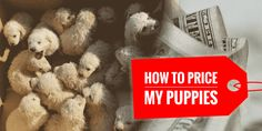 How Much To Sell a Puppy For?  As a hobby, show or professional dog breeder, we're often wondering how to price my puppies right? The worst method to price each puppy of a litter is to declare a price based on what other breeders are doing. With that being said, you cannot just randomly come up with a figure and expect people to pay it without questioning you.