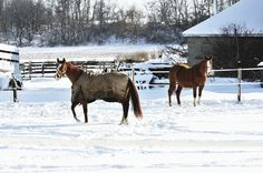 Fall is here. The leaves are changing colors. It is time to prepare your barn and your aging equine for winter. There are several major considerations when preparing your older horse for winter.