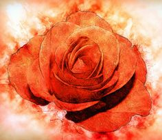 Die Rose von Max Steinwald