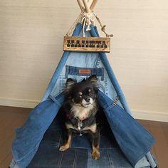 ☺︎︎ こんにちU•ɷ•)ฅワン * * @needle5works さんのDENITIPIに✨ @threekings_lifewithdog さんのネームプレートをプラス✨ カッコいい~😁🎶 * あ〜っ😩早く引っ越したい😆💦 まめの新居&表札は完璧なのに😂 * まめたんのお家へようこそ~💕 みたいな顔してる(*≧艸≦) * * #チワワ#chihuahua#chihuahualove #chihuahualife#犬#dog#dogs#doglife #dogstagram#ロンチー#ロングコートチワワ #ブラックタン#ブラックタンチワワ#愛犬 #チワワ部#目ヤニ部#犬バカ部#ティピーテント #DENITIPI#ネームプレート ☺︎︎