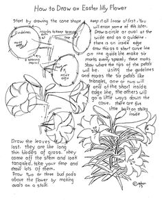 Drawing Flowers How to Draw Worksheets for The Young Artist: How To Draw An Easter Lilly Worksheet Drawing Skills, Drawing Lessons, Drawing Techniques, Art Lessons, Drawing Tips, Flower Drawing Tutorials, Art Tutorials, Flower Drawings, Plant Drawing