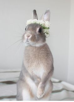 fbunnyw:  adorable little bunny on We Heart It - http://weheartit.com/entry/66677764/via/XGeneral_LouisX Hearted from: upload