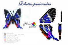 "Scheme to the butterfly ""Rhetus periander"""