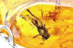 Rare Königsberg Antique 14k Gold Unique Spider von Twenzocom