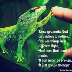 The Bond with Nature. In sync Nature Animals, Animals And Pets, Save Animals, Connection Quotes, Vegan Memes, Nature Quotes, Meeting New People, Beautiful Creatures, Mother Nature