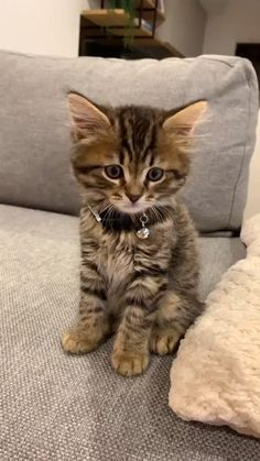 TOO CUTE TO BE LEGAL! Cute Little Kittens, Cute Baby Cats, Cute Cats And Kittens, Kittens Cutest, Cute Dogs, Kittens Meowing, Funny Kittens, Funny Cute Cats, Cute Funny Animals