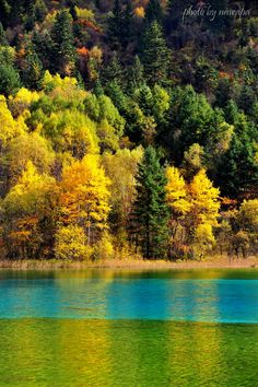 https://flic.kr/p/aGDj5g | Yellow, Blue and Green | Five Flower Lake, Jiuzhaigou Valley Scenic and Historic Interest Area, Nanping County, Sichuan Province, Southwestern China