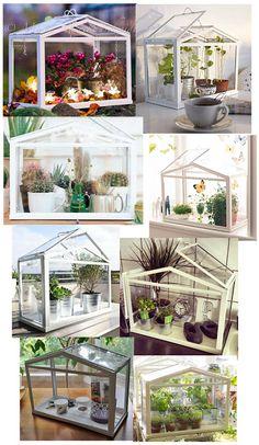 mini serre cactus the flower power pinterest jardins serres et cactus. Black Bedroom Furniture Sets. Home Design Ideas