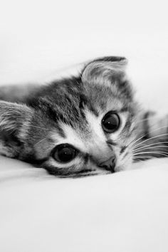 Cute Kitten iPhone Wallpaper | iPod touch Wallpapers | iPhone4 Background | Android Live Wallpapers