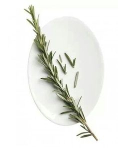 Sniff Rosemary, sharpen your mind!