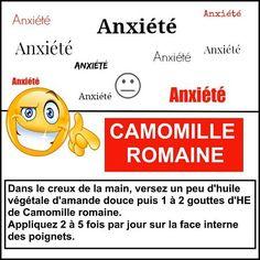 anxiété camomille romaine