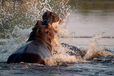 Animal Action, Horses, In This Moment, Animals, Animales, Animaux, Animal, Animais, Horse