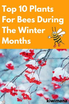 Winters are the months that come out to be a little hard to survive for anybody.  Here are some ideas for plants that will help bees during the coldest season. via @kiwimana