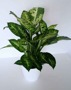 office plant - Google Search
