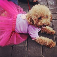 Dress up, doggy! :)