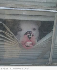 At least his teeth are white! Little Bristles in Salinas, CA @ littlebristlespediatricdentistry.com