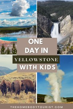 How to spend one day in Yellowstone National Park with Kids. All the best stops to make from the West Entrance. Waterfalls, bison, geysers, hot springs, and MORE! Yellowstone National Park, National Parks, Travel Around The World, Around The Worlds, Road Trip Hacks, Cool Pools, Weekend Getaways, Time Travel, Things To Do