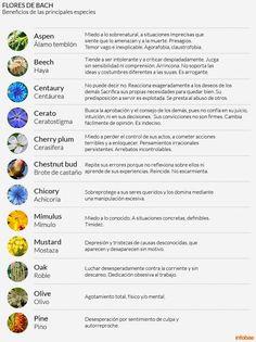 Esencias florales para tratar situaciones emocionales. Cómo utilizarlas para combatir la angustia y mantenerse en forma Chestnut Bud, Bach Flowers, Switch Words, Vegetarian Lifestyle, Naturopathy, Emotional Healing, Reiki, Trees To Plant, Flower Cards