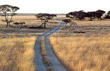 The Department of Wildlife and National Parks is tasked with the responsibility of conserving and managing the country's wildlife resources and their habitats. Detective Agency, Conservation, Habitats, National Parks, To Go, Wildlife, Africa, Country Roads, Jet Plane