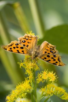 Autumn foliage and butterfly