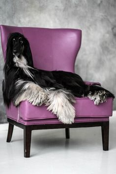 Afghan Hound - just being beautiful 🐾🐾 Photo Animaliere, Most Beautiful Dogs, Afghan Hound, Dog Id, Hound Dog, Happy Dogs, Beautiful Creatures, Best Dogs, Dog Breeds