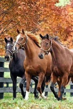 The most important role of equestrian clothing is for security Although horses can be trained they can be unforeseeable when provoked. Riders are susceptible while riding and handling horses, espec… Most Beautiful Animals, Beautiful Horses, Beautiful Creatures, Beautiful Beautiful, Farm Animals, Animals And Pets, Cute Animals, Wild Animals, Majestic Horse