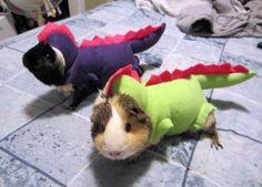 Diino guinea pigs! rrrawr! I need a dinosaur costume and a guinea pig stat!!!
