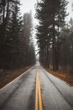 Dream Road | Road | Road Trip | Road Photo | Landscape photography | scenic | trees | forest | Drive | travel | wanderlust | on the road | empty road | Schomp BMW