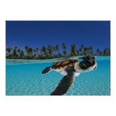 Nengo-nengo Atoll, French Polynesia. Poster $20.95