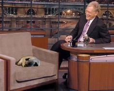 Guest falls asleep on late night Letterman show! #dogs #pets #Pugs