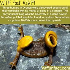 WTF Facts : the picture that is shown here is of a California Newt and that is their basic defense mechanism.
