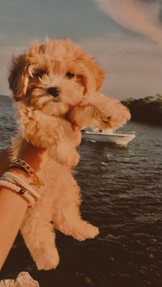 Very Cute Dogs, Super Cute Puppies, Baby Animals Super Cute, Cute Baby Dogs, Cute Little Puppies, Cute Dogs And Puppies, Cute Little Animals, Doggies, Cute Puppy Wallpaper