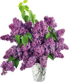 Png Wazony Kwiaty   Programy,generatory,ramki foto,gify,obrazki,linki...