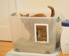 Guest Post by Daniela Caride Your cat may not be using the litter box for many reasons. If you have ruled out diseases by taking your cat to the vet, you should go over this list I came up with. Your cat might be unhappy with one or some of those issues. Too few boxes …