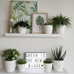 alphabet lifestyleGet The Look : Green with envy Alphabet Lifestyle Interior Design grüne Raumdekoration Ideen – sehen Sie mehr Easy Home Decor, Cheap Home Decor, Plant Aesthetic, Boho Home, Deco Floral, Green Rooms, Room Inspiration, Easy Diy, Easy Crafts