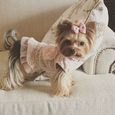 LOOK AT MY CUTE DRESS. - Tap the pin for the most adorable pawtastic fur baby apparel! You'll love the dog clothes and cat clothes!
