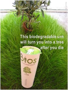 This is a Bios Urn, a completely biodegradable urn that contains a single tree seed. When planted, the tree seed is nourished by and absorbs the nutrients from the ashes. The urn itself is made from coconut shell and contains compacted peat and cellulose. The ashes are mixed with this, and the seed placed inside. You can even choose which type of tree you'd like to grow!