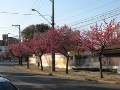 Rua Anita Garibaldi, Ahú