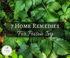 Try these 7 home remedies for poison ivy to help relieve the pain, itch and other symptoms caused by the rash. No need to go to the pharmacy!