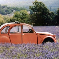 lost in lavender Manx, 2cv6, Poster Pictures, Provence France, Vintage Heart, Lavender Fields, Car Humor, Cool Posters, Old Cars