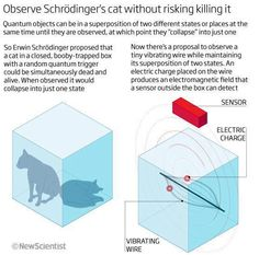 """How to Observe Schrodinger's Cat Without Killing it:  Schrödinger's cat is by far the best known example of demonstrating quantum superpositions. Now, scientists might be able to observe the cat without risking killing it.  First, lets quickly recap Schrodinger's cat. To quote from the NewScientist picture, """"Erwin Schrödinger proposed that a cat in a closed, booby-trapped box with a random quantum trigger could be simultaneously dead and alive."""" From here, the o"""