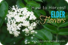 As summer arrives the impending cold and flu season is perhaps the furthest thing from our minds.Yet even now there is a special plant blooming right in your own backyard that you'll be glad you took notice of come the first viral pandemic