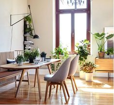 lots of greenery and natural light in dining room, midcentury table and chairs, black wall sconce