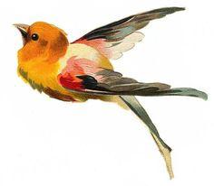 Bird in flight (yellow, red, black)