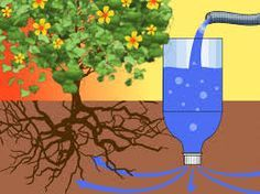 Drip irrigation is a cost-effective method of watering your plants. Through a network of inexpensive pipes and tubing, drip irrigation allows for water to slowly drip directly to the plants' roots, without any of the water wastage that is. Soda Bottles, Plastic Bottles, Water Bottles, Self Watering Bottle, Garden Watering System, Diy Self Watering Planter, Self Watering Plants, Plants In Bottles, Drip Irrigation System