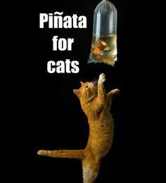 Piñata para gatos