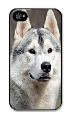 iPhone 4/4S Case DAYIMM Animals Dogs Husky Outdoors Pets Black PC Hard Case for Apple iPhone 4/4S DAYIMM? http://www.amazon.com/dp/B012IPO8UW/ref=cm_sw_r_pi_dp_d6cmwb173B52D