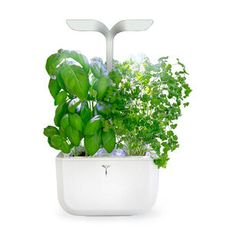 Designed for people who love to cook, the Smart Indoor Garden allows you to effortlessly grow herbs, edible flowers and even small vegetables in your home, all year round. Organic Soil, Organic Seeds, Edible Plants, Edible Flowers, Edible Garden, Garden Online, External Lighting, Smart Garden, Growing Herbs