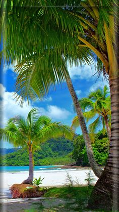 Tropical Paradise Beach Romantic Getaways: Consider a Tropical Paradise Tropical Paradise Beach. If your idea of a romantic getaway is a tropical paradise, then there are many places that you can g… Beautiful Nature Wallpaper, Beautiful Landscapes, Wallpapers Galaxy, Wallpaper Wallpapers, Beach Wallpaper, Tropical Beaches, Tropical Paradise, Nature Pictures, Beautiful Pictures